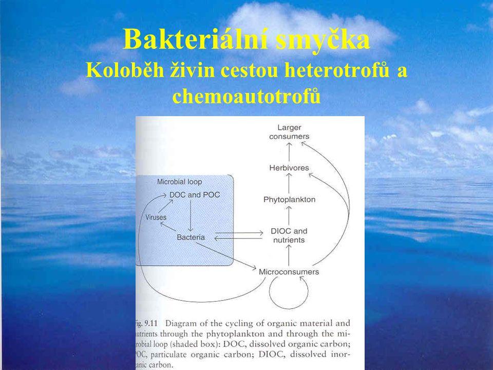 Bakteriální smyčka Koloběh živin cestou heterotrofů a chemoautotrofů