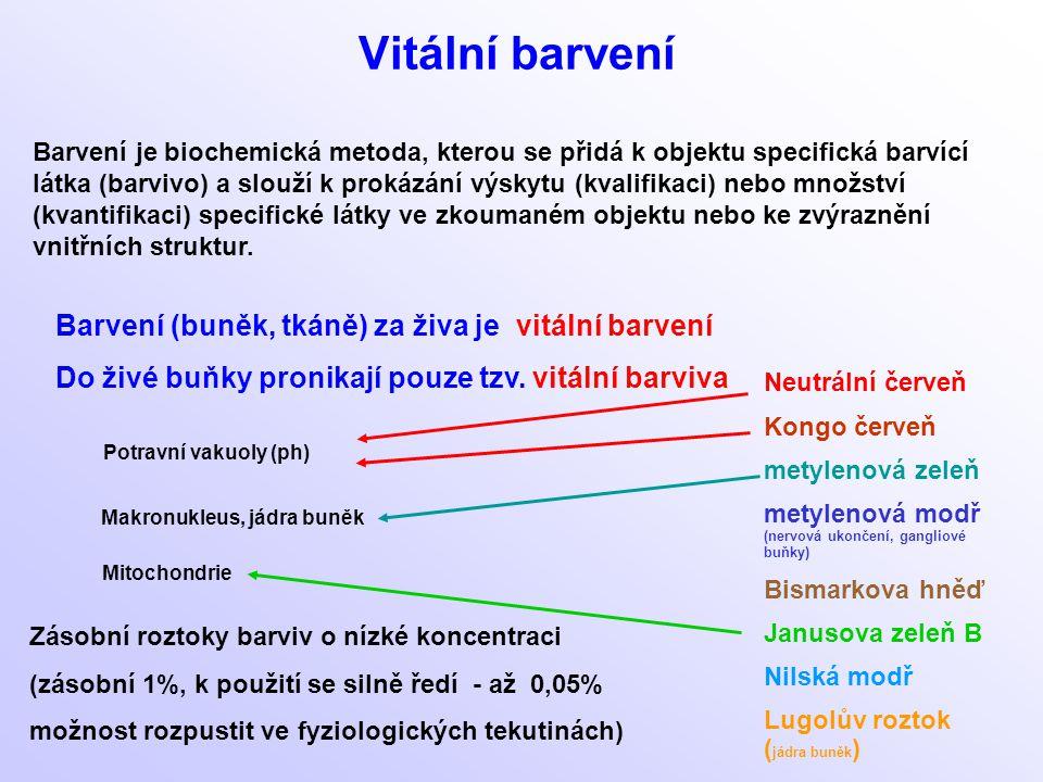 Vitální barvení Barvení (buněk, tkáně) za živa je vitální barvení Do živé buňky pronikají pouze tzv. vitální barviva Zásobní roztoky barviv o nízké ko