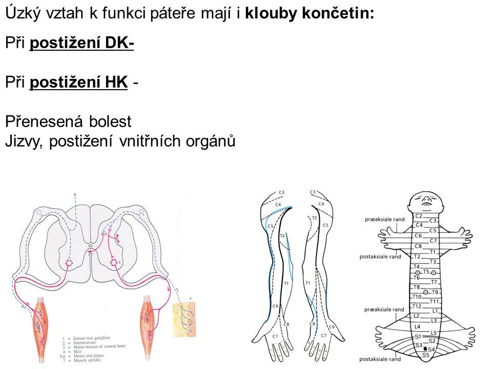 Při postižení DK- Při postižení HK - Přenesená bolest Jizvy, postižení vnitřních orgánů Úzký vztah k funkci páteře mají i klouby končetin: