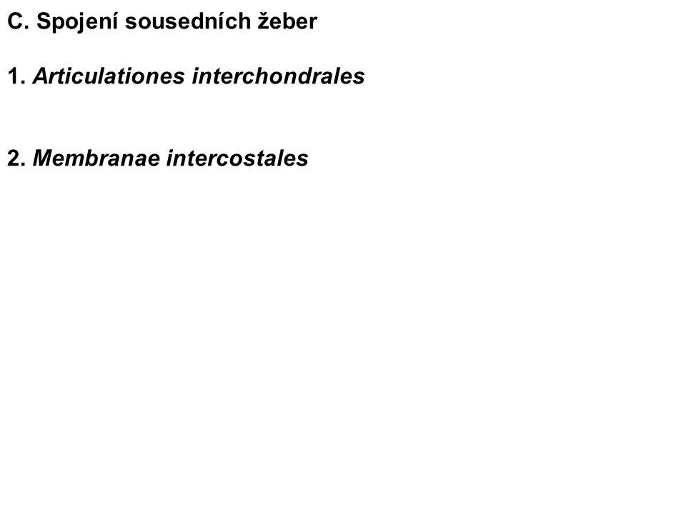 C. Spojení sousedních žeber 1. Articulationes interchondrales 2. Membranae intercostales