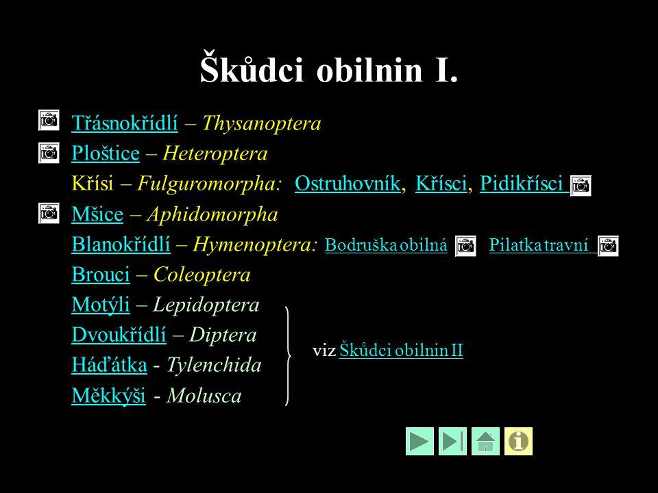 Škůdci obilnin I. TřásnokřídlíTřásnokřídlí – Thysanoptera PlošticePloštice – Heteroptera Křísi – Fulguromorpha: Ostruhovník, Křísci, PidikřísciOstruho