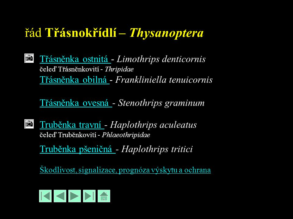 řád Třásnokřídlí – Thysanoptera Třásněnka ostnitá Třásněnka ostnitá - Limothrips denticornis čeleď Třásněnkovití - Thripidae Třásněnka obilná Třásněnka obilná - Frankliniella tenuicornis Třásněnka ovesná Třásněnka ovesná - Stenothrips graminum Truběnka travní Truběnka travní - Haplothrips aculeatus čeleď Truběnkovití - Phlaeothripidae Truběnka pšeničná Truběnka pšeničná - Haplothrips tritici Škodlivost, signalizace, prognóza výskytu a ochrana