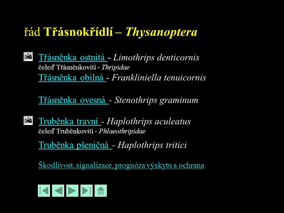 řád Třásnokřídlí – Thysanoptera Třásněnka ostnitá Třásněnka ostnitá - Limothrips denticornis čeleď Třásněnkovití - Thripidae Třásněnka obilná Třásněnk