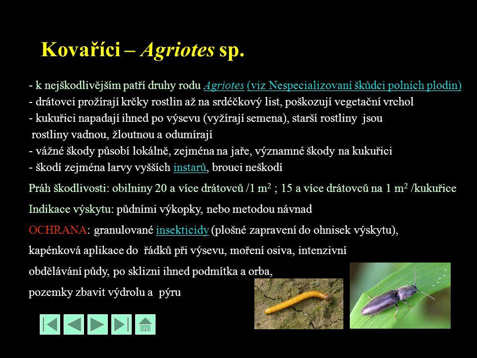 Kovaříci – Agriotes sp. - k nejškodlivějším patří druhy rodu Agriotes (viz Nespecializovaní škůdci polních plodin)Agriotes(viz Nespecializovaní škůdci