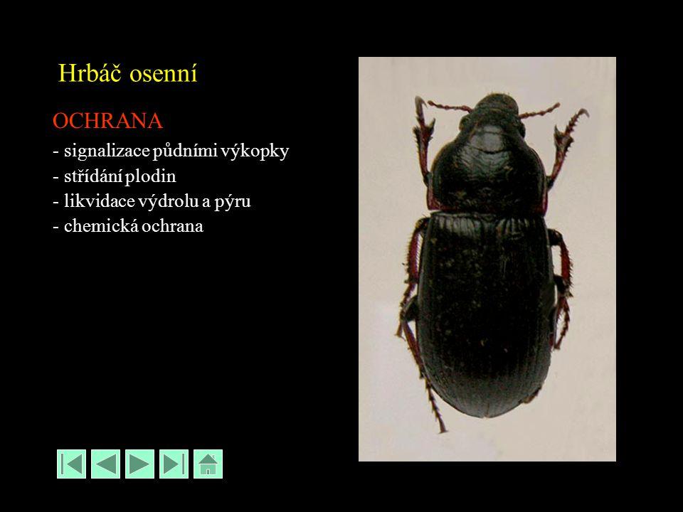 Hrbáč osenní OCHRANA - signalizace půdními výkopky - střídání plodin - likvidace výdrolu a pýru - chemická ochrana