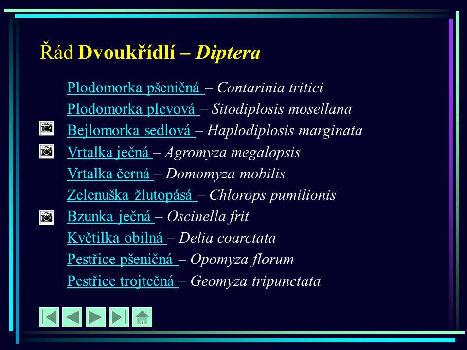 Řád Dvoukřídlí – Diptera Plodomorka pšeničná Plodomorka pšeničná – Contarinia tritici Plodomorka plevová Plodomorka plevová – Sitodiplosis mosellana B