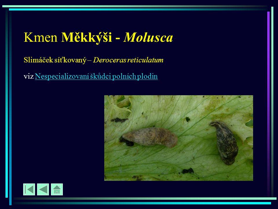 Kmen Měkkýši - Molusca Slimáček síťkovaný – Deroceras reticulatum viz Nespecializovaní škůdci polních plodinNespecializovaní škůdci polních plodin