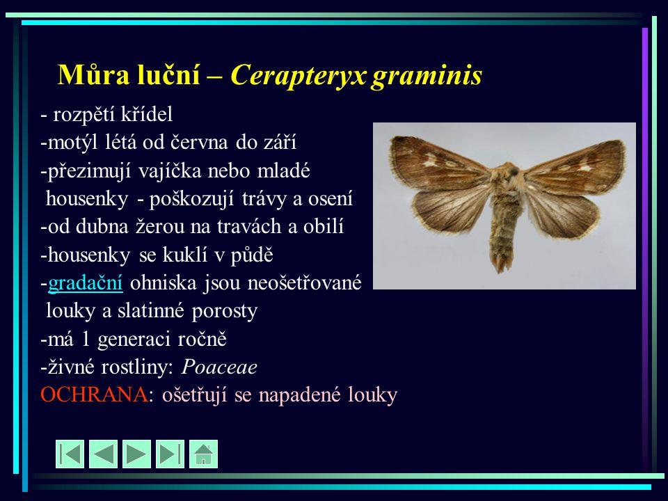 Můra luční – Cerapteryx graminis - rozpětí křídel -motýl létá od června do září -přezimují vajíčka nebo mladé housenky - poškozují trávy a osení -od d