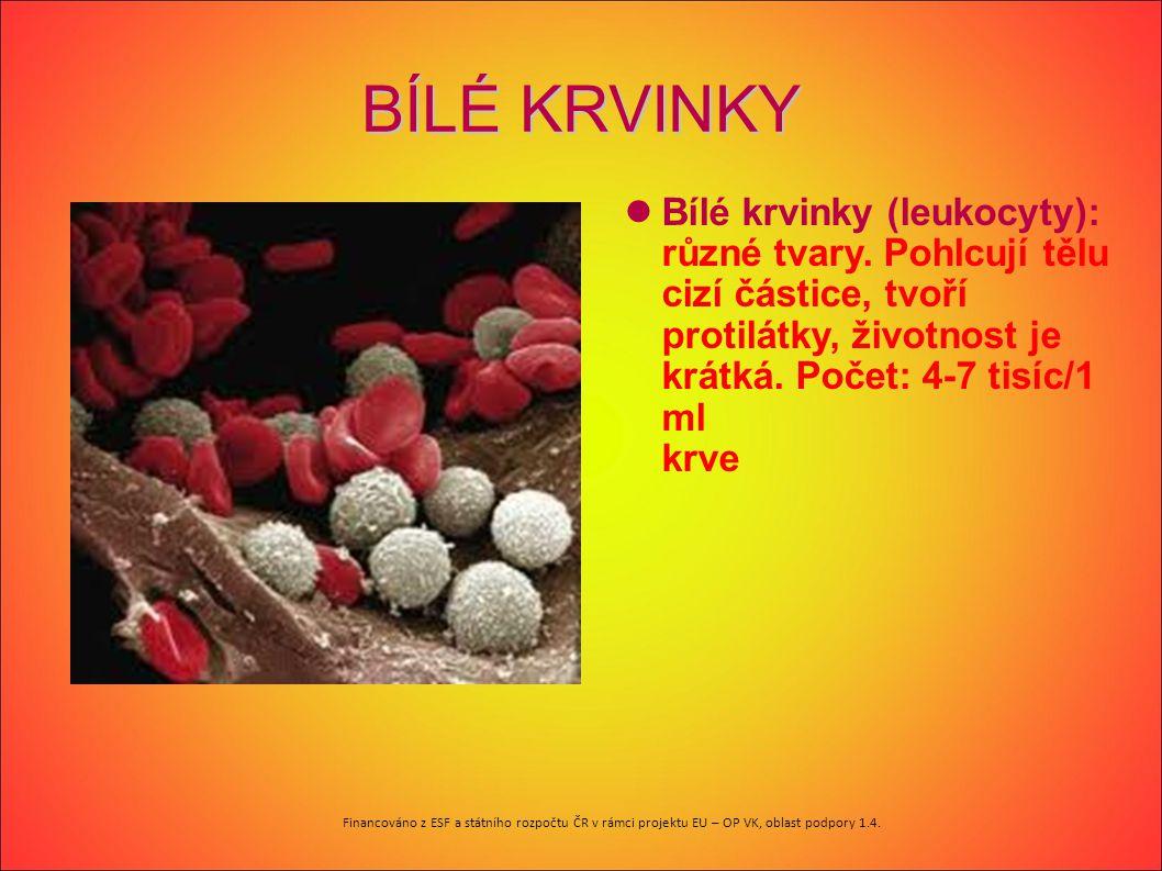 BÍLÉ KRVINKY Bílé krvinky (leukocyty): různé tvary. Pohlcují tělu cizí částice, tvoří protilátky, životnost je krátká. Počet: 4-7 tisíc/1 ml krve červ