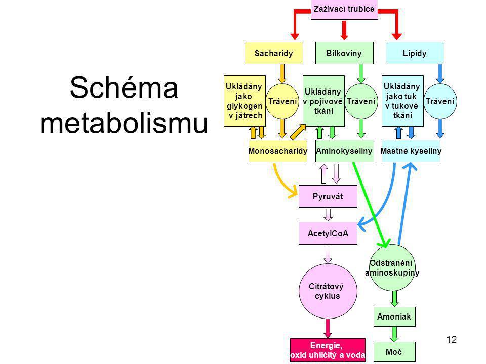 12 Schéma metabolismu Zažívací trubice SacharidyBílkovinyLipidy MonosacharidyAminokyselinyMastné kyseliny Trávení Ukládány jako glykogen v játrech Ukl