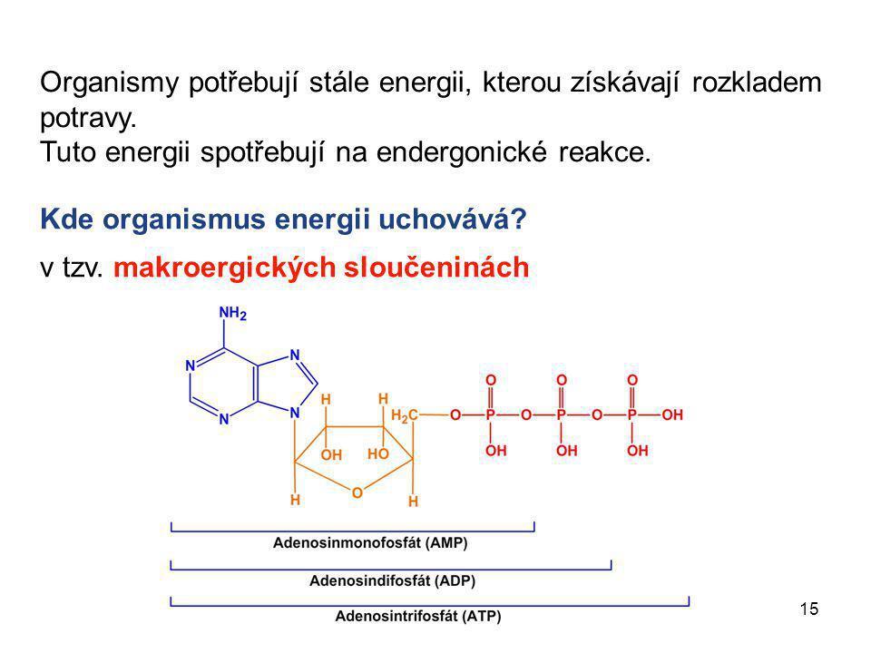 15 Organismy potřebují stále energii, kterou získávají rozkladem potravy. Tuto energii spotřebují na endergonické reakce. Kde organismus energii uchov