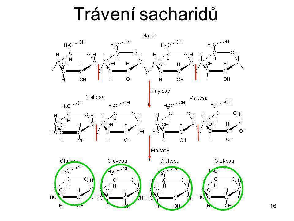 16 Trávení sacharidů