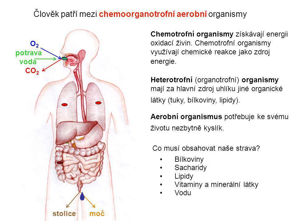 2 O2O2 CO 2 potrava voda stolicemoč Člověk patří mezi chemoorganotrofní aerobní organismy Chemotrofní organismy získávají energii oxidací živin. Chemo