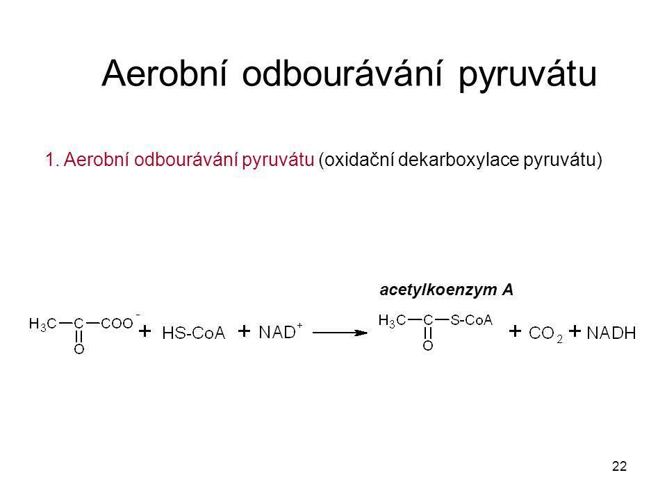 22 Aerobní odbourávání pyruvátu 1. Aerobní odbourávání pyruvátu (oxidační dekarboxylace pyruvátu) acetylkoenzym A