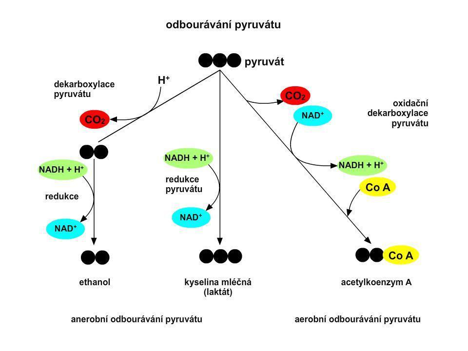 26 Aerobní a anaerobní odbourávání - schéma pyruvát aerobní odbourávání anaerobní odbourávání acetylkoenzym A citrátový cyklus + dýchací řetězec CO 2, H 2 O + energie tvorba laktátualkoholové kvašení laktátethanol