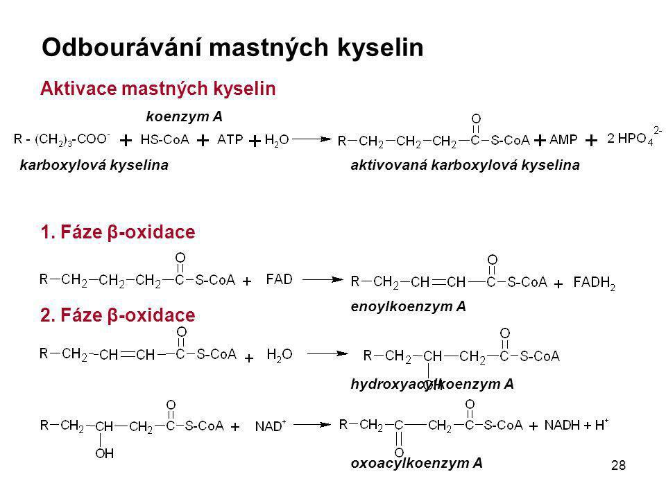 28 Odbourávání mastných kyselin Aktivace mastných kyselin 1. Fáze β-oxidace 2. Fáze β-oxidace karboxylová kyselina koenzym A aktivovaná karboxylová ky