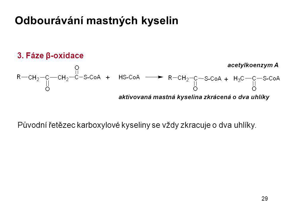 29 3. Fáze β-oxidace aktivovaná mastná kyselina zkrácená o dva uhlíky Odbourávání mastných kyselin acetylkoenzym A Původní řetězec karboxylové kyselin