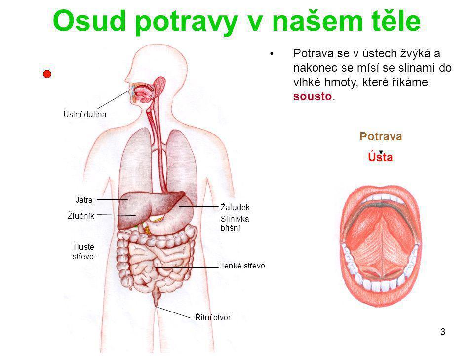 3 Játra Žlučník Slinivka břišní Řitní otvor Žaludek Tenké střevo Tlusté střevo Ústní dutina Osud potravy v našem těle Potrava se v ústech žvýká a nako