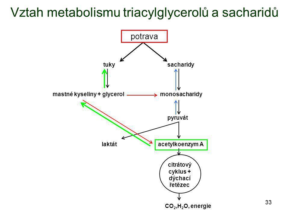 33 Vztah metabolismu triacylglycerolů a sacharidů tukysacharidy pyruvát acetylkoenzym A potrava mastné kyseliny + glycerolmonosacharidy laktát citráto