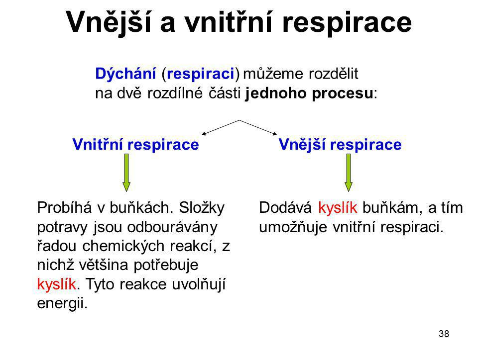 38 Dýchání (respiraci) můžeme rozdělit na dvě rozdílné části jednoho procesu: Vnitřní respiraceVnější respirace Dodává kyslík buňkám, a tím umožňuje v