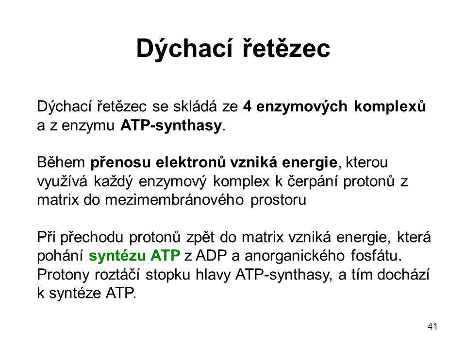 41 Dýchací řetězec Dýchací řetězec se skládá ze 4 enzymových komplexů a z enzymu ATP-synthasy. Během přenosu elektronů vzniká energie, kterou využívá