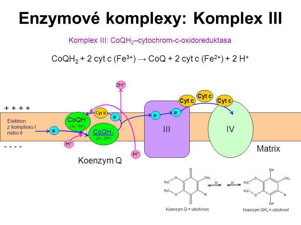 47 Elektron z komplexu I nebo II IV Komplex III: CoQH 2 –cytochrom-c-oxidoreduktasa CoQH 2 + 2 cyt c (Fe 3+ ) → CoQ + 2 cyt c (Fe 2+ ) + 2 H + Enzymov