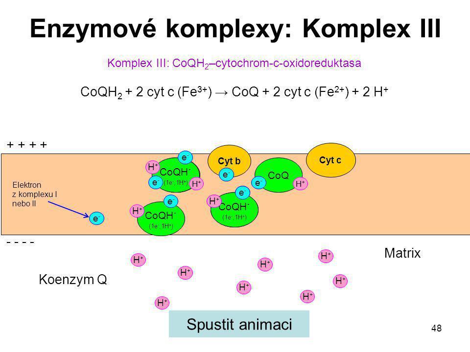 48 Elektron z komplexu I nebo II Komplex III: CoQH 2 –cytochrom-c-oxidoreduktasa CoQH 2 + 2 cyt c (Fe 3+ ) → CoQ + 2 cyt c (Fe 2+ ) + 2 H + Enzymové k