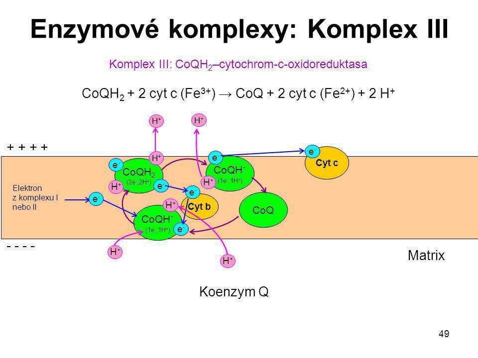49 Elektron z komplexu I nebo II Komplex III: CoQH 2 –cytochrom-c-oxidoreduktasa CoQH 2 + 2 cyt c (Fe 3+ ) → CoQ + 2 cyt c (Fe 2+ ) + 2 H + Enzymové k