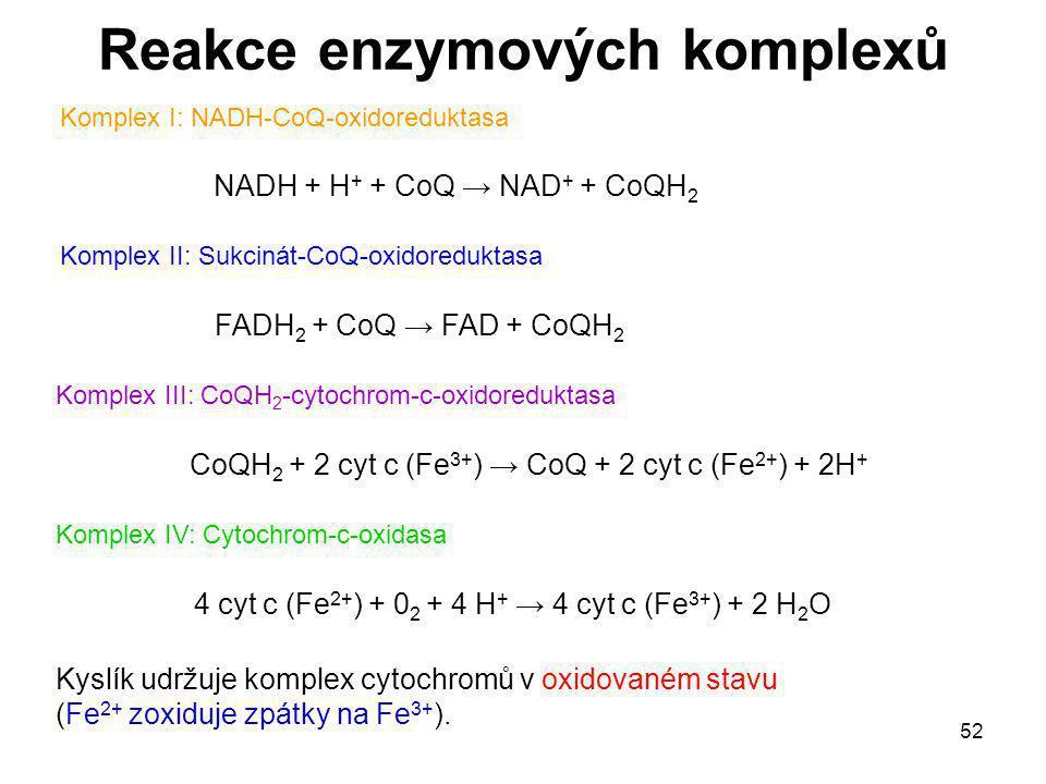 52 Reakce enzymových komplexů Komplex I: NADH-CoQ-oxidoreduktasa Komplex II: Sukcinát-CoQ-oxidoreduktasa Komplex III: CoQH 2 -cytochrom-c-oxidoredukta