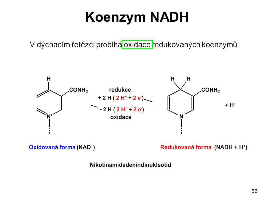 56 V dýchacím řetězci probíhá oxidace redukovaných koenzymů. Koenzym NADH