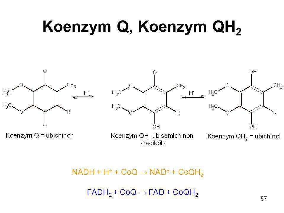 57 Koenzym Q, Koenzym QH 2 NADH + H + + CoQ → NAD + + CoQH 2 FADH 2 + CoQ → FAD + CoQH 2