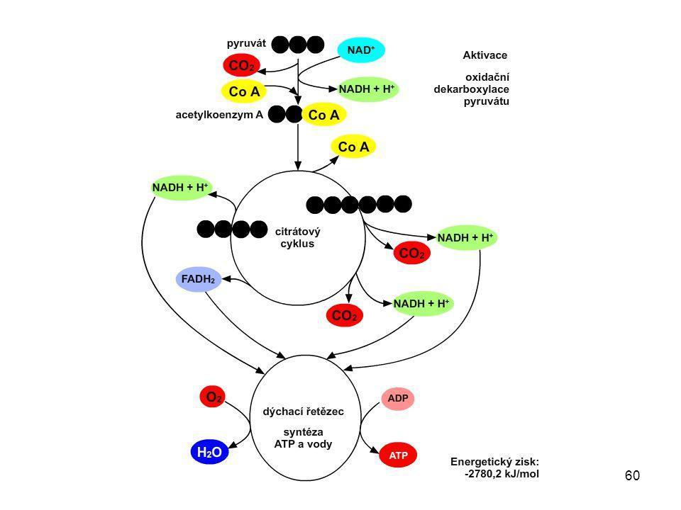 61 [1] ALBERTS, B.a kol. Základy buněčné biologie.