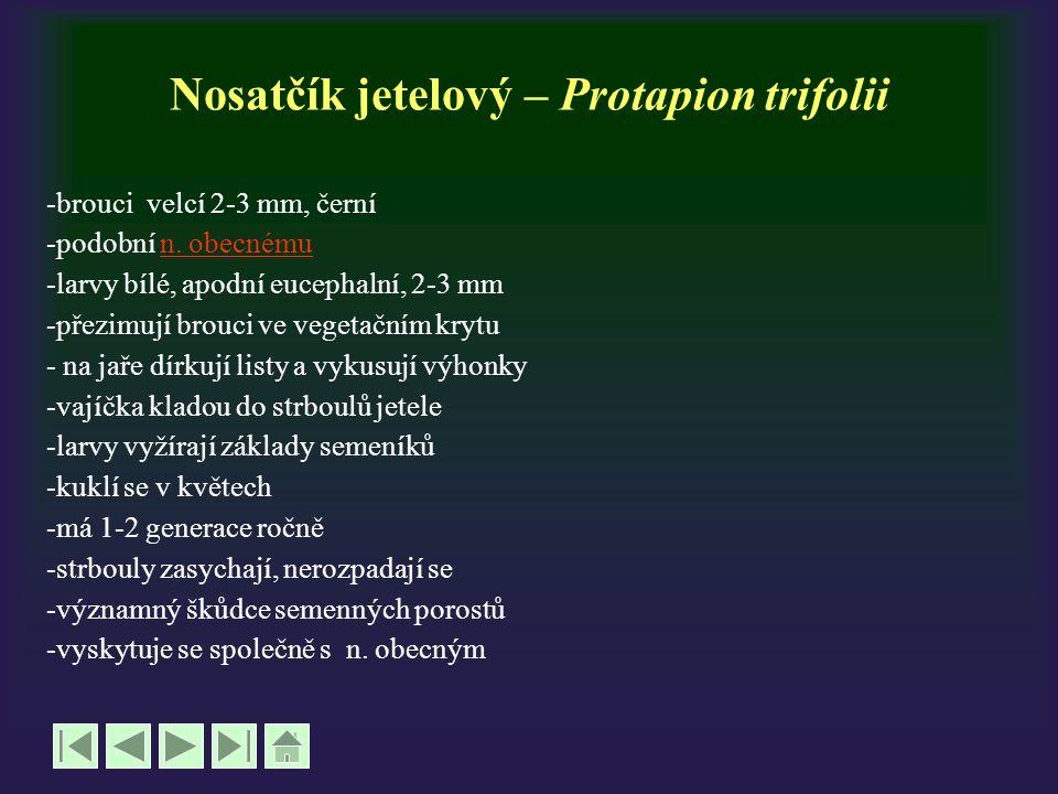 Nosatčík jetelový – Protapion trifolii -brouci velcí 2-3 mm, černí -podobní n. obecnémun. obecnému -larvy bílé, apodní eucephalní, 2-3 mm -přezimují b