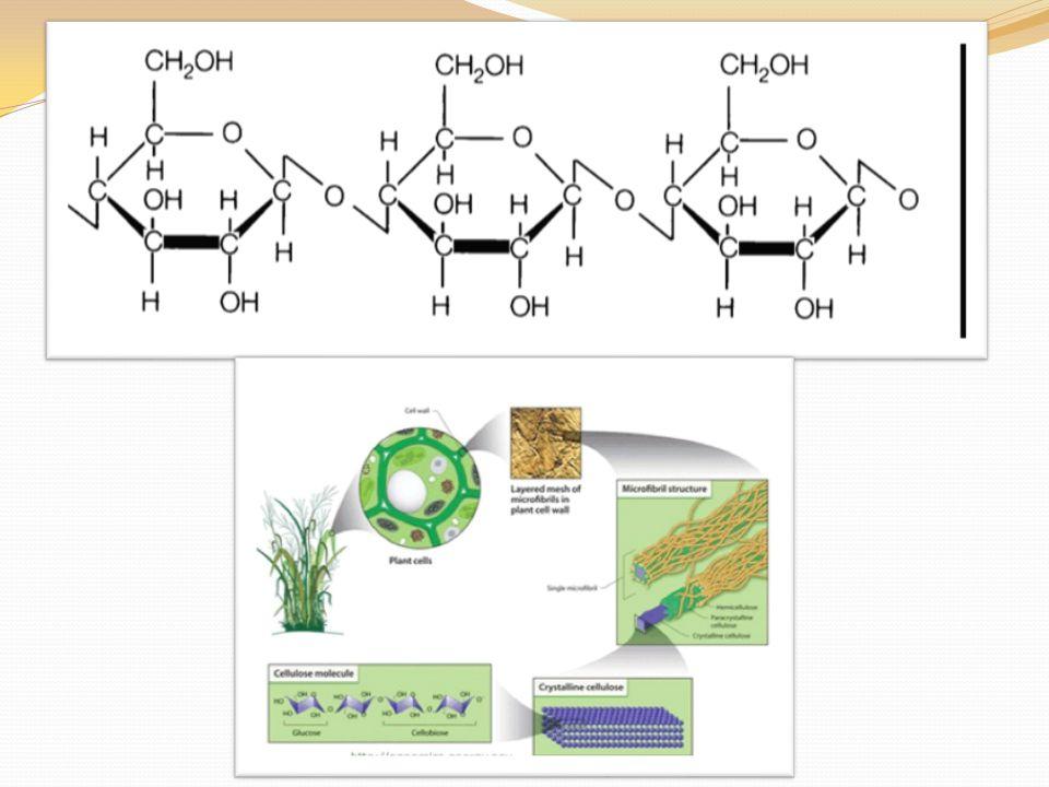Využití Celulosa se pro komerční účely izoluje ze dřeva odstraněním ostatních složek.