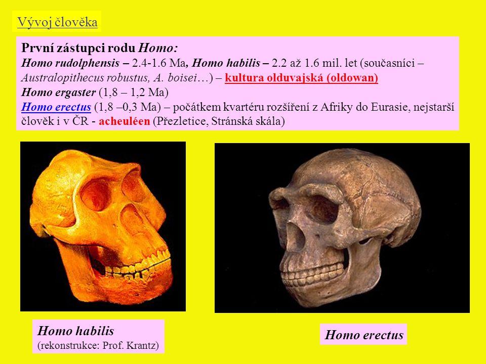 Homo habilis (rekonstrukce: Prof.