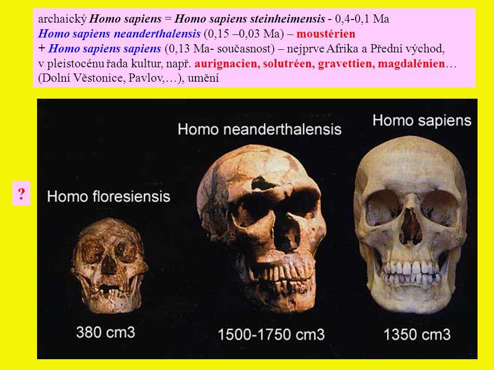 archaický Homo sapiens = Homo sapiens steinheimensis - 0,4-0,1 Ma Homo sapiens neanderthalensis (0,15 –0,03 Ma) – moustérien + Homo sapiens sapiens (0,13 Ma- současnost) – nejprve Afrika a Přední východ, v pleistocénu řada kultur, např.