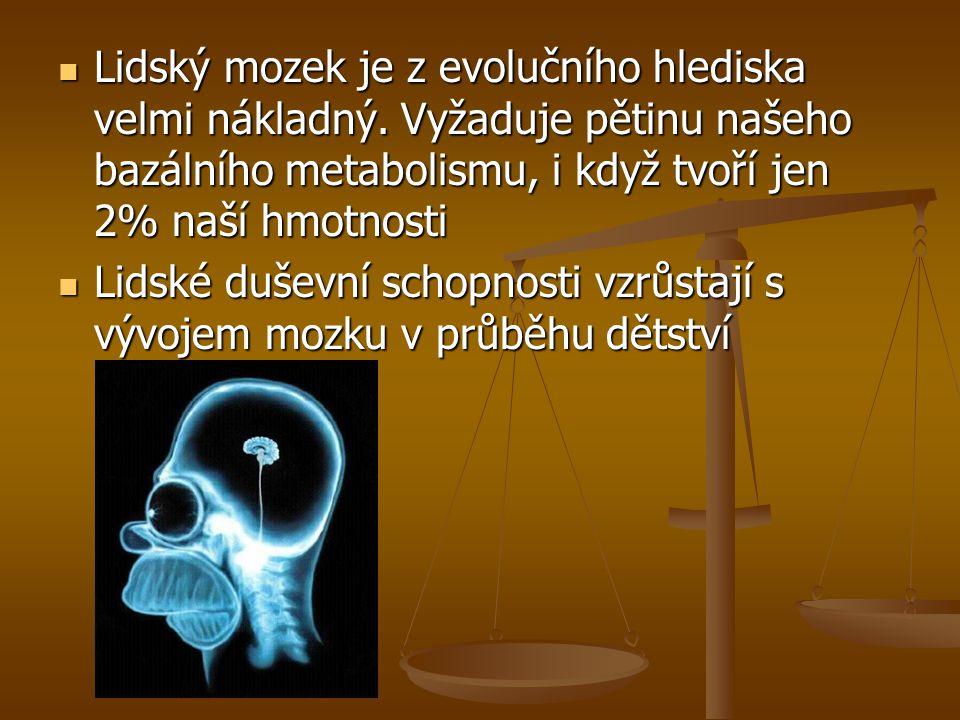 Lidský mozek je z evolučního hlediska velmi nákladný. Vyžaduje pětinu našeho bazálního metabolismu, i když tvoří jen 2% naší hmotnosti Lidský mozek je