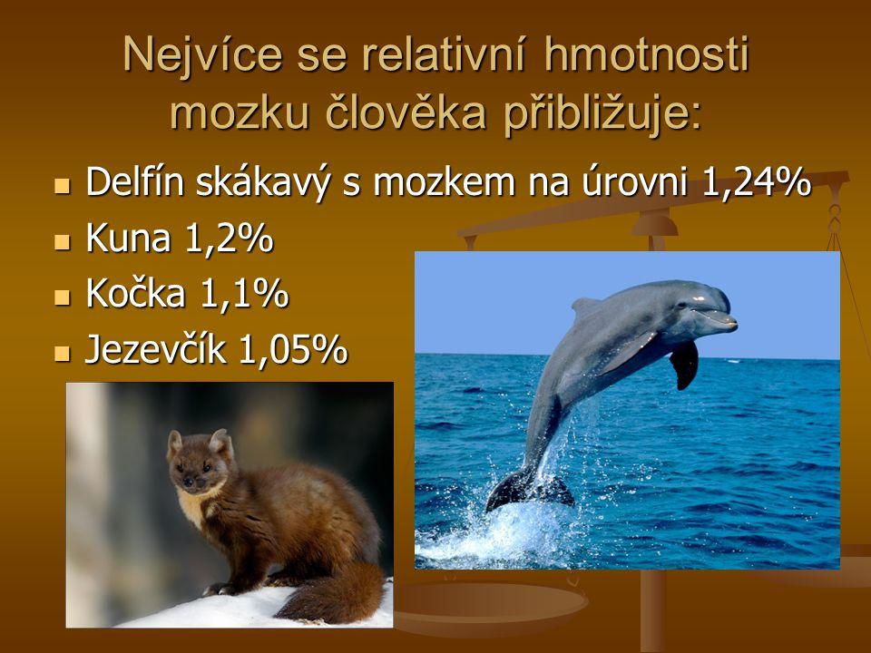 Nejvíce se relativní hmotnosti mozku člověka přibližuje: Delfín skákavý s mozkem na úrovni 1,24% Delfín skákavý s mozkem na úrovni 1,24% Kuna 1,2% Kun