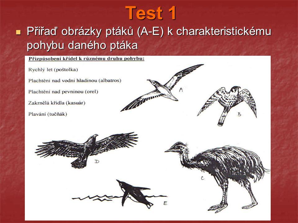 Test 1 Přiřaď obrázky ptáků (A-E) k charakteristickému pohybu daného ptáka Přiřaď obrázky ptáků (A-E) k charakteristickému pohybu daného ptáka