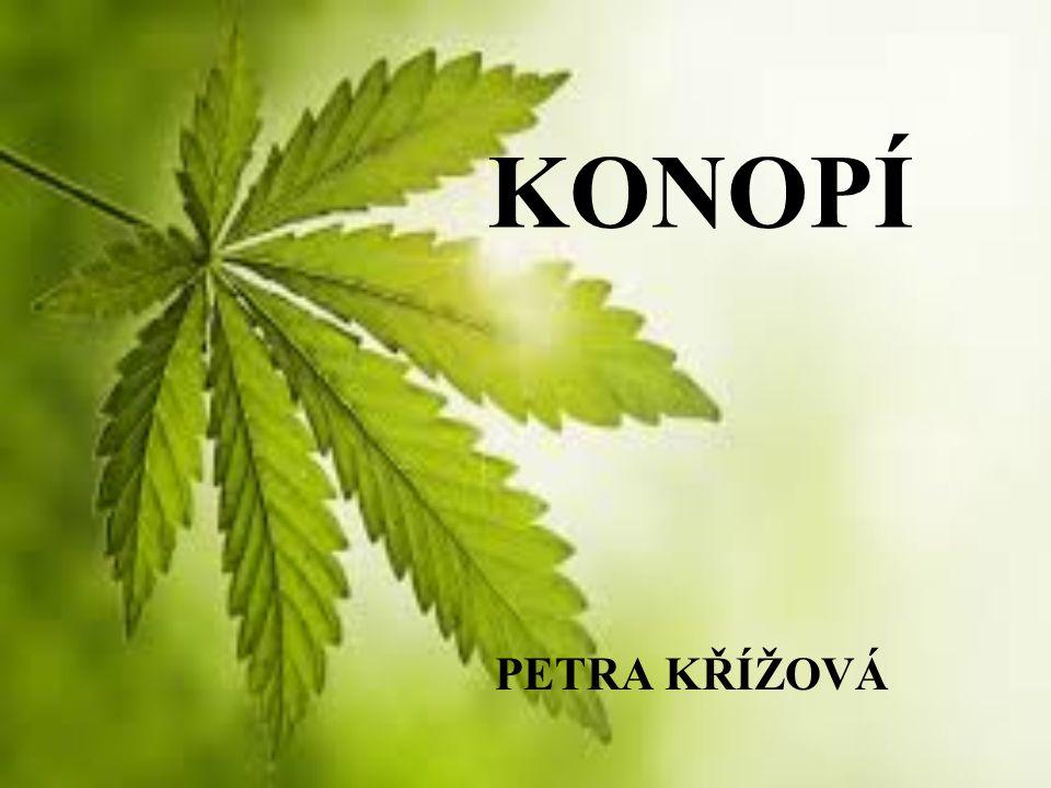 TROCHA BOTANIKY Říše:rostliny (Plantae) Podříše:cévnaté rostliny (Tracheobionta) Oddělení:krytosemenné (Magnoliophyta) Třída:vyšší dvouděložné (Rosopsida) Řád:růžotvaré (Rosales) Čeleď:konopovité (Cannabaceae) Rod:konopí (Cannabis) 3 DRUHY: konopí indické – Cannabis indica Lam a konopí seté – Cannabis sativa L..