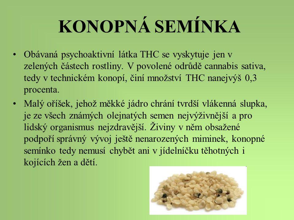 KONOPNÁ SEMÍNKA Obávaná psychoaktivní látka THC se vyskytuje jen v zelených částech rostliny. V povolené odrůdě cannabis sativa, tedy v technickém kon