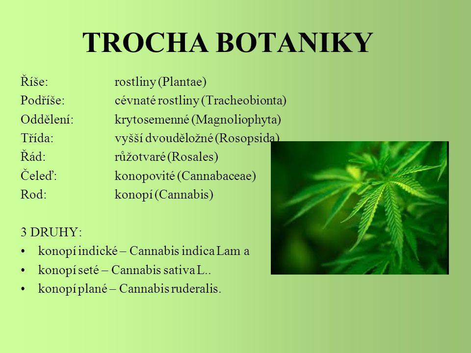 KONOPÍ Dnešní technické konopí zahrnuje odrůdy konopí setého šlechtěné za účelem snížení hladiny THC pod úroveň 1% (běžný obsah je od 5 do 15%).