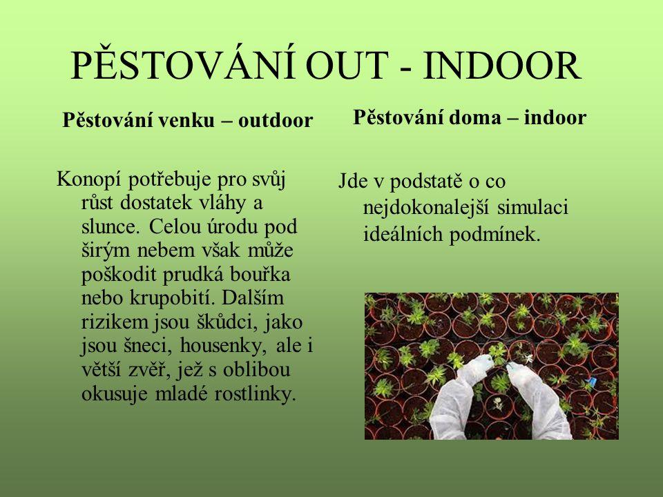 PĚSTOVÁNÍ OUT - INDOOR Pěstování venku – outdoor Konopí potřebuje pro svůj růst dostatek vláhy a slunce. Celou úrodu pod širým nebem však může poškodi