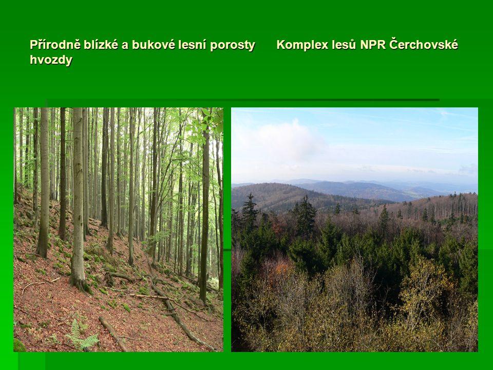 Přírodně blízké a bukové lesní porosty Komplex lesů NPR Čerchovské hvozdy