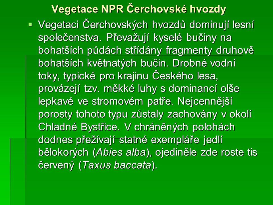 Vegetace NPR Čerchovské hvozdy  Vegetaci Čerchovských hvozdů dominují lesní společenstva. Převažují kyselé bučiny na bohatších půdách střídány fragme