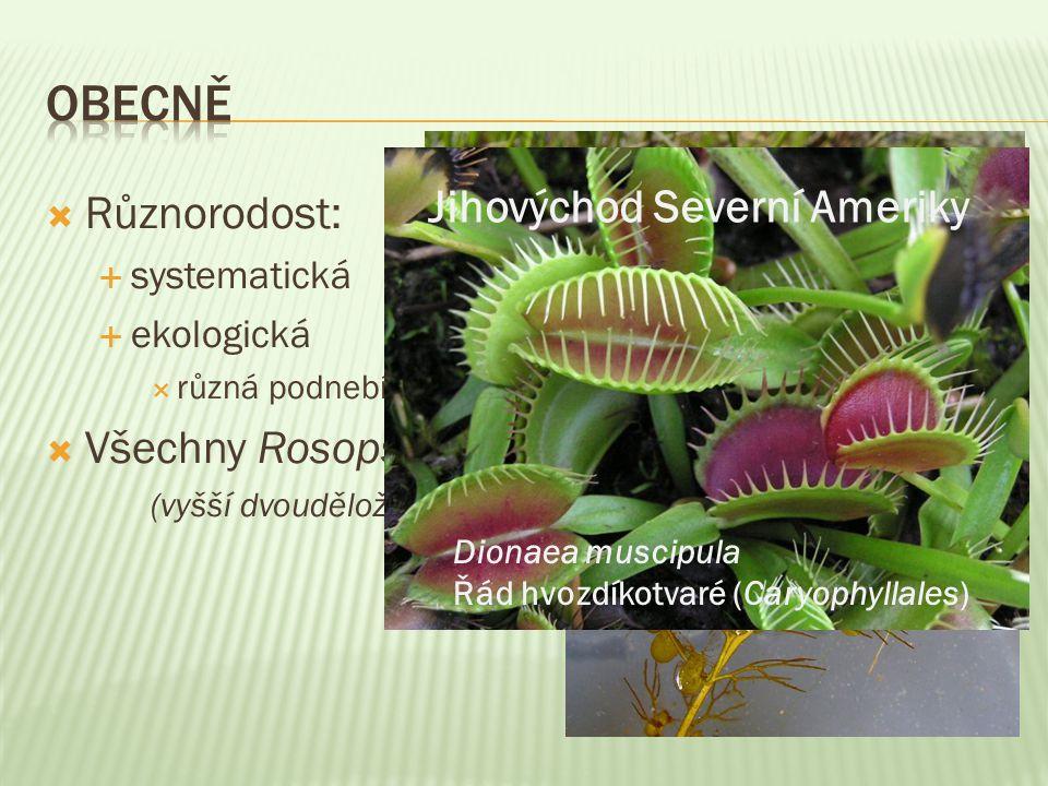  Různorodost:  systematická  ekologická  různá podnebí, biomy  Všechny Rosopsida (vyšší dvouděložné) Utricularia řád hluchavkotvaré (Lamiales) Ce