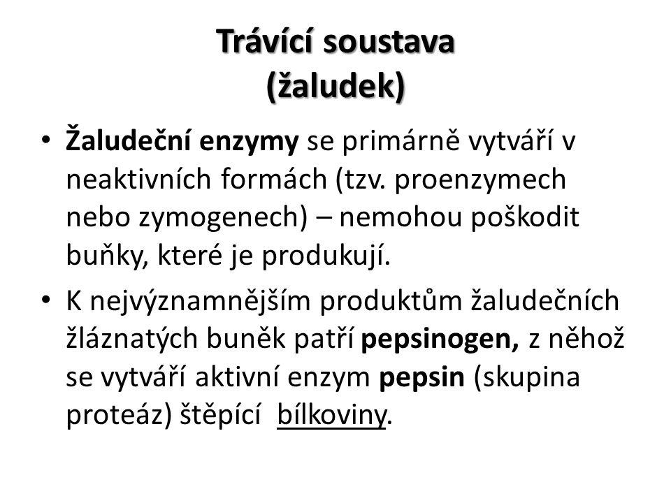 Trávící soustava (žaludek) Žaludeční enzymy se primárně vytváří v neaktivních formách (tzv.