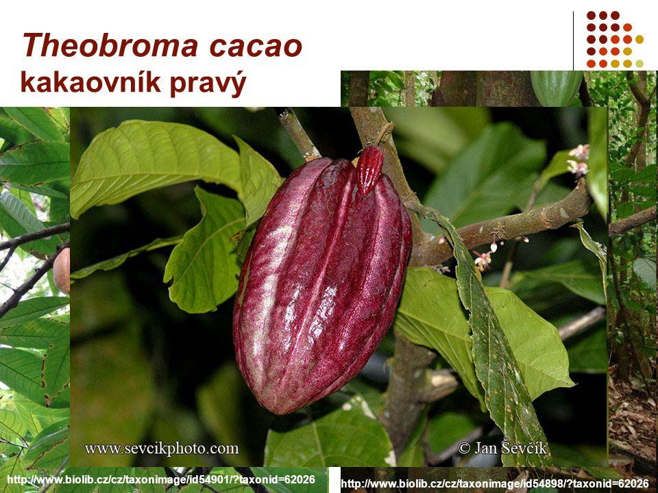 http://www.biolib.cz/cz/taxonimage/id54898/?taxonid=62026 http://www.biolib.cz/cz/taxonimage/id54901/?taxonid=62026