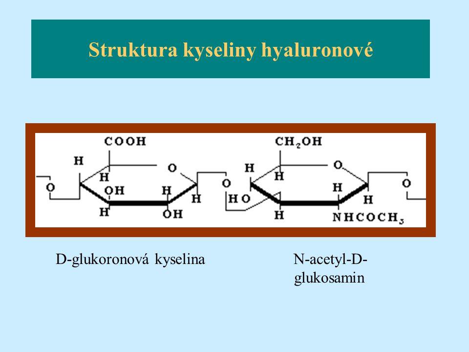Struktura kyseliny hyaluronové D-glukoronová kyselina N-acetyl-D- glukosamin