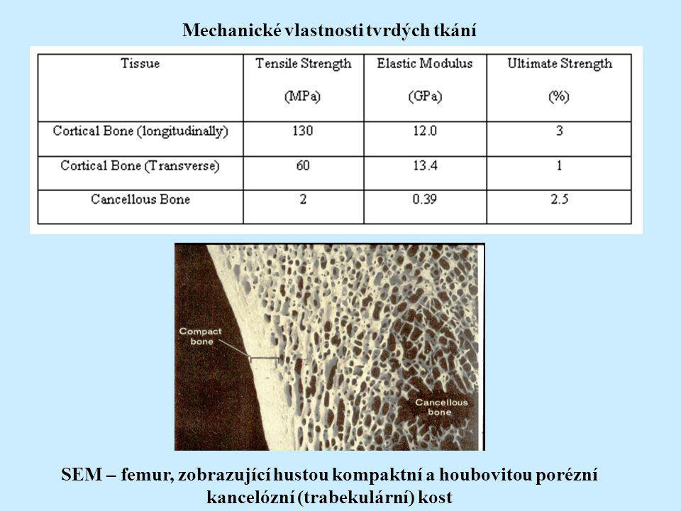 SEM – femur, zobrazující hustou kompaktní a houbovitou porézní kancelózní (trabekulární) kost Mechanické vlastnosti tvrdých tkání